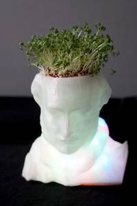 Albert-Kunststoff-Büste mit Kresse als Haar